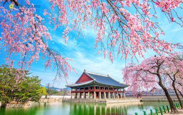 Combo du lịch Hàn Quốc